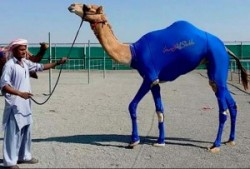 Compression Wear Has Made It Over The Hump – Of A Camel